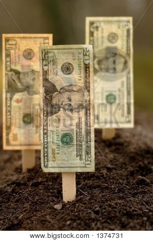 Financial Planting