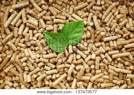 Green leaf on solid wooden pellets background