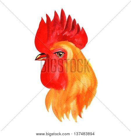 Hand drawn animalistic illustration. Image of roosters isolated on white.