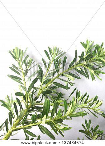 close up of bonsai on white background