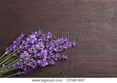 Bunch of lavender on a dark wooden background.
