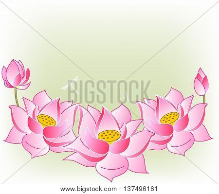 pink lotus flowers and buds vector illustration