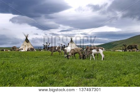 Deers and nentsy camping-ground Polar Urals Russia