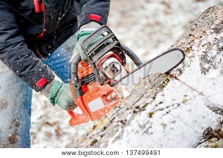 Woodcutter Or Lumberjack Cutting Fire Wood In Garden During Wint