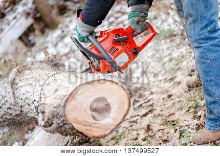 Industrial Lumberjack cutting trees with electric chainsaw