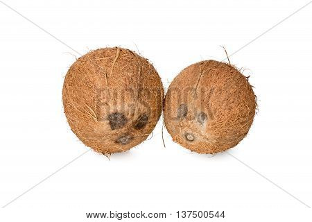 Two coconut with eyes nose and mouth like man and woman isolated on white background