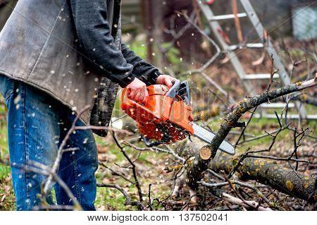 Sawdust Flies As A Man Cuts A Fallen Tree Into Logs. A Chainsaw