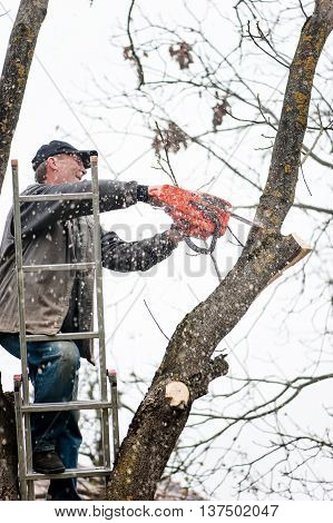 Man Climbing A Ladder And Cutting Fire Wood With Professional Ch