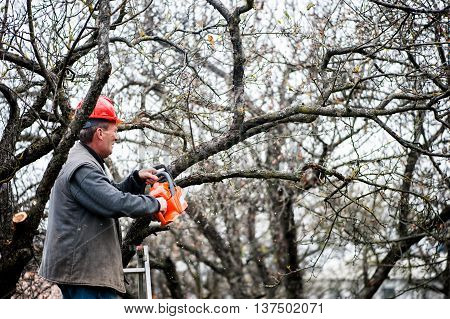 Man Cutting Wood From Trees With Electrical Chainsaw And Ladder