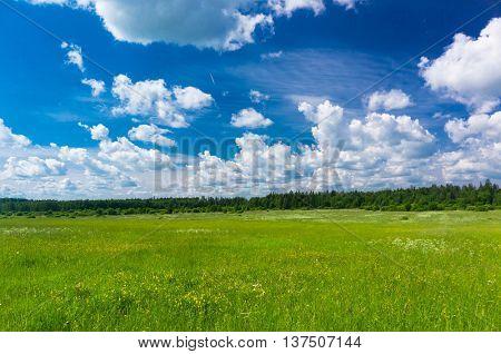 Grass Lawn Fresh Landscape