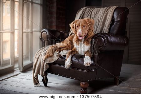 dog resting on a chair by the window