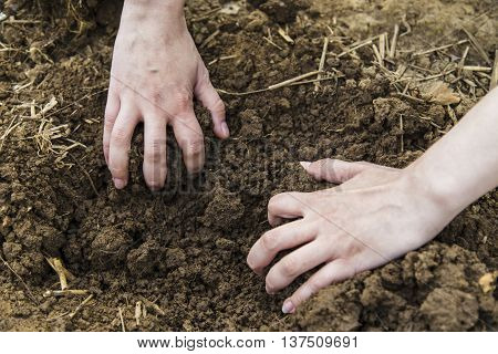 Woman hands digging ground in spring in garden