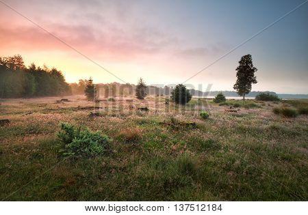 forest meadow by lake in misty sunrise Drenthe Netherlands