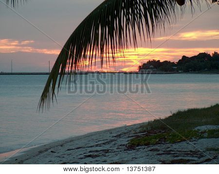 A nice sunset scene looking through a palm branch