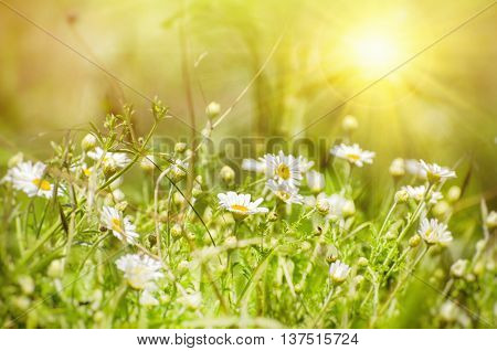 Photo of White Daisies Field in Sunny Day