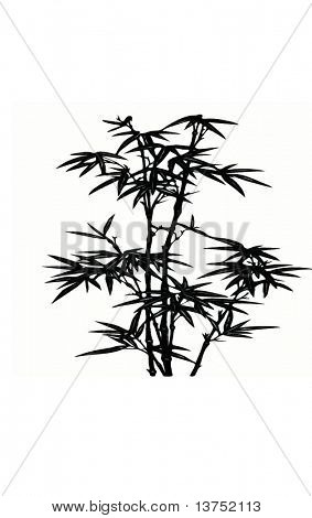 Bambus-Vektor, isolated on white