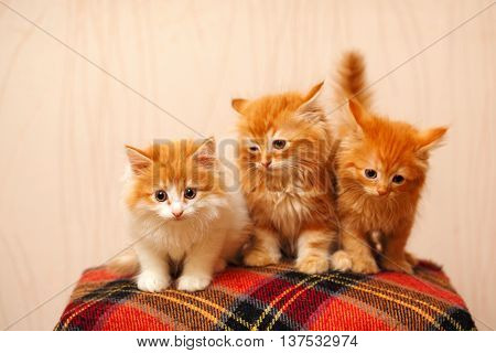 Three cute ginger kittens sit on plaid. Pets. Funny animals.