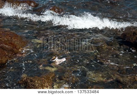 Children's boot in the water on black sand volcanic beach in Tangkoko National Park. North Sulawesi. Indonesia