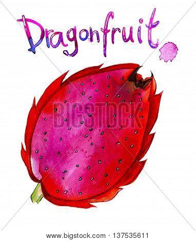 Watercolor illustration of exotic tropical fruit Pitaya Dragonfruit. Hand drawn illustration isolated on white background.