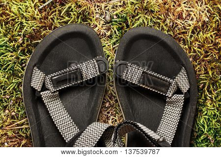 Male Beach Sandals On Moss Background