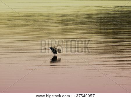 Great Blue Heron Flying Low Over Lake Guntersville Alabama With Gradient Colors