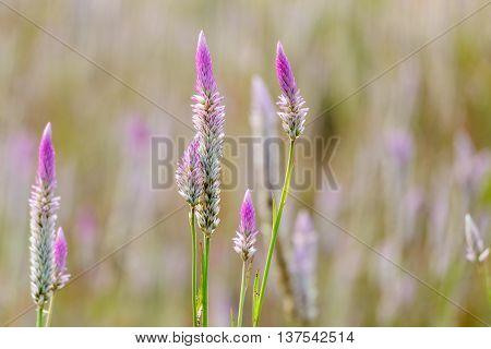Beutiful wild flowers at tropical Island of Borneo.