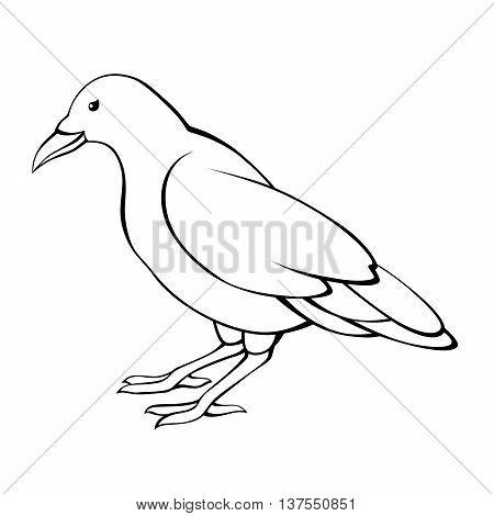 Crow bird black white raven isolated illustration vector