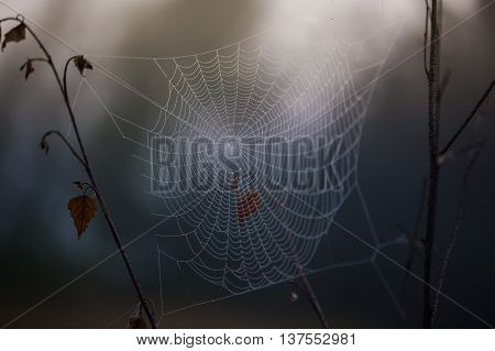structure and pattern that will make the spider web in the morning in the mountains in the national park