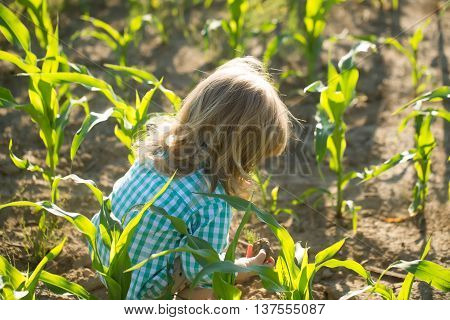Cute little boy with long blond hair sits in green cornfield on sunny summer day on natural background
