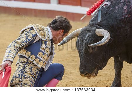 Pozoblanco Spain - September 23 2011: The Spanish Bullfighter David Fandila El Fandi bullfighting with the crutch a few inches of the bull's head in the Bullring of Pozoblanco Spain