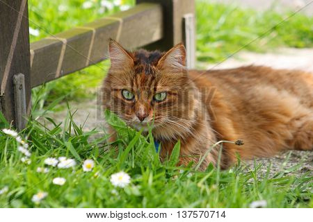 A fluffy tabby cat lying in the shade beneath a bench