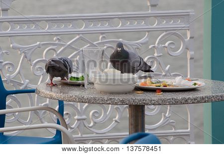 Wild Pigeons feeding on scraps and left-overs at an outdoor cafe