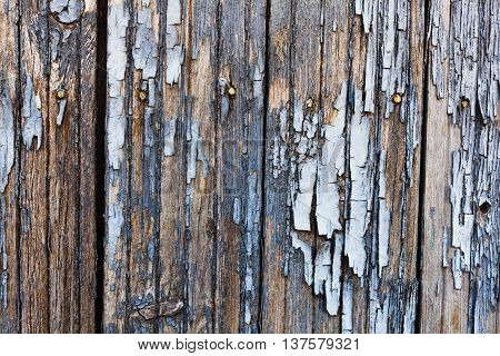 Old painted wood texture. Horizontal shot. Grey tonality