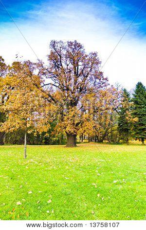 Nature Wood Foliage