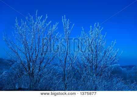 Ice Covered Trees