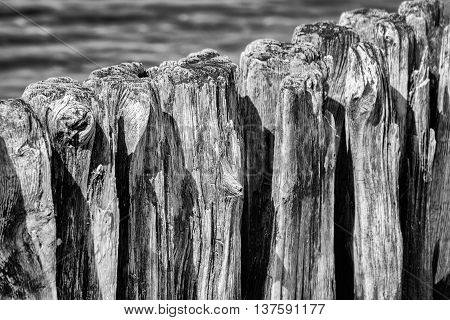 Close up from Wodden groyne in black and white