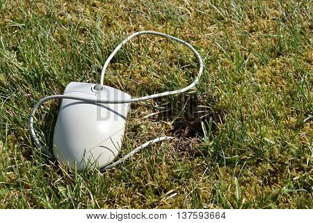 Computer mouse lying in the grass is connected to the mouse hole.