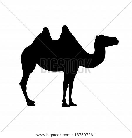 bactrian camel vector black on white silhouette