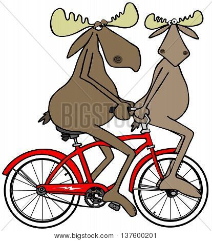 Illustration of a bull moose pedaling a red bicycle with his calf on the handlebars.