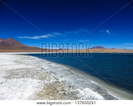 Beautiful lake and blue sky in South America at high altitude with flamingos