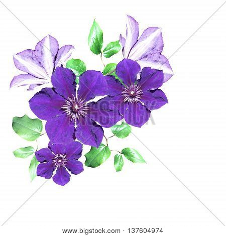 Delicate floral background of beautiful purple clematis