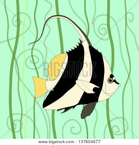 Pennant coralfish isolated vector illustration background algae
