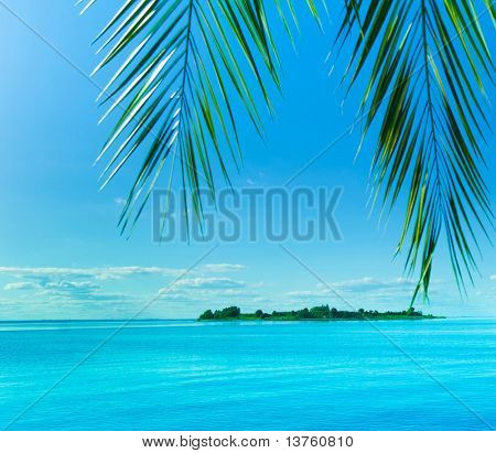 Palm Resort Fantasy