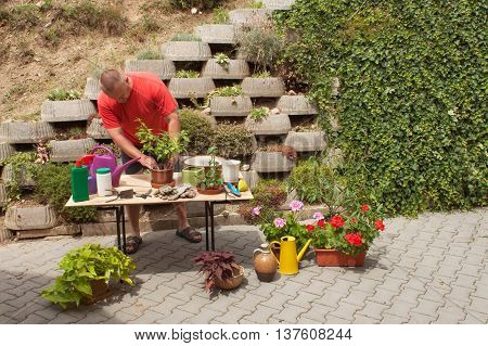 Man working in garden. Gardener offsets flowers. Man gardener cutting plants with garden scissors.