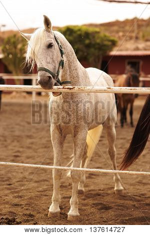 Horse farm on a sunny day. White horse standing near fence.