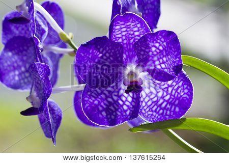 Bouquet of purple orchids (Vanda), beautiful orchids.