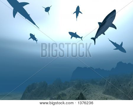 Flight Of Sharks