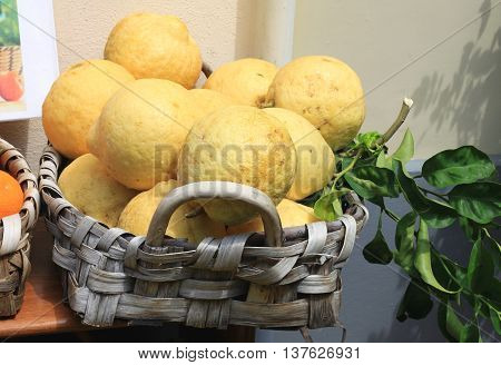Very large lemons with green leaves in a basket