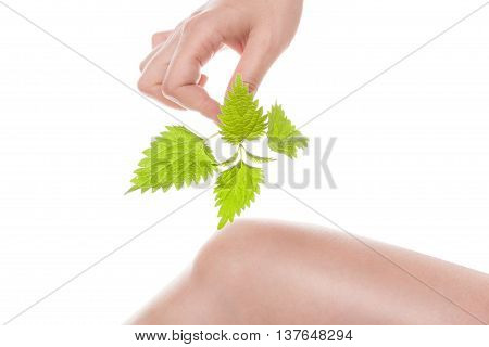 Female hand holding stinging nettle and touching her knee. Natural arthritis medicine.