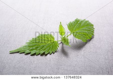 Fresh stinging nettle leaves on black stone background. Natural alternative medicine healthy lifestyle.